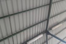 siatka gołębie