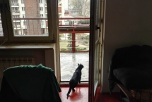 siatka zabezpieczająca dla kota