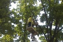 przycinanie gałęzi na wysokości