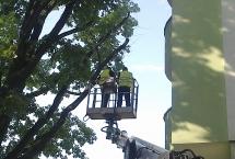 obcinanie gałęzi na wysokości