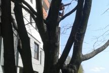 pielęgnacja drzew Bielany