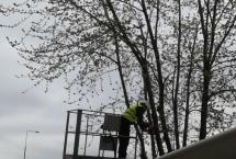 pielęgnacja drzew Białółęka
