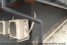 czyszczenie i dezynfekcja ptasich odchodów